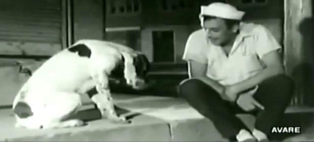 köpekle konuşma